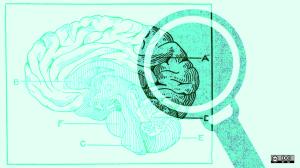 magnifying brain